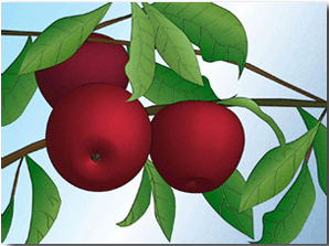 apples-on-a-branch